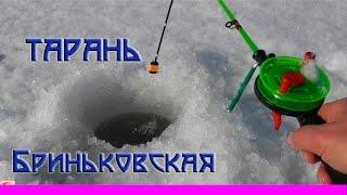 ТАРАНЬ- Подледный лов на лимане. Рыбалка. Ловля тарани на поплавочную удочку и кивок. fishing.