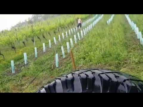Neubepflanzung #5: Wässern im Regen