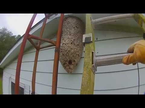 4 foot tall Hornets Nest attack