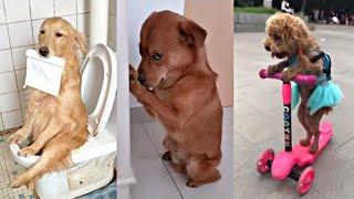 Videos De Risa nuevos 😂 Mascotas Graciosos - Momentos Divertidos De Gatos, Perros, etc, Chistosos #2