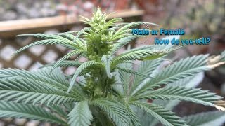 How to tell iḟ your plant is Male or Female