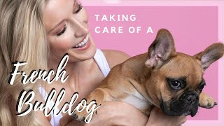 HOW TO TAKE CARE OF A FRENCH BULLDOG PUPPY | Allyn Rose