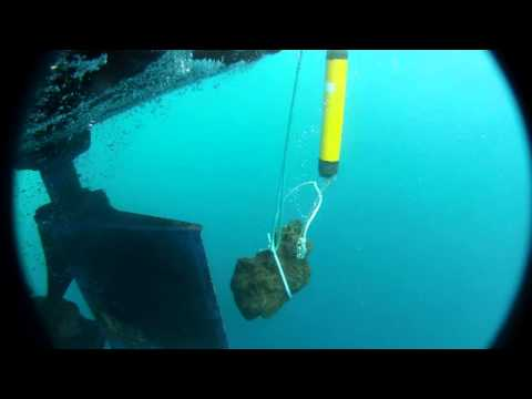 Acoustic Station Deployment @ Gigante Seamount
