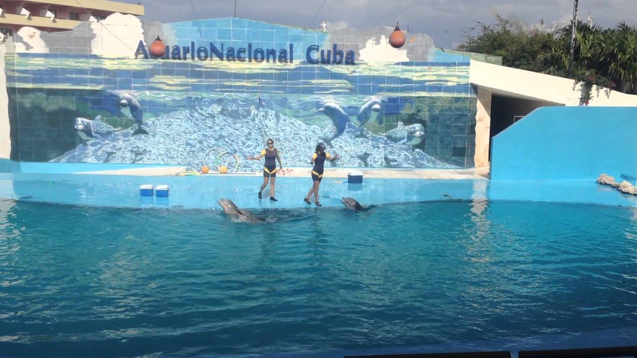 Acuario Nacional De Cuba - Delfines Cantando