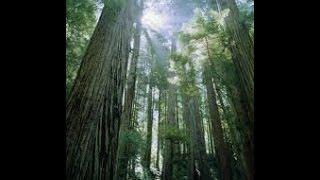 Sequoia Park, Eureka California セコイア公園、ユーレカカリフォルニア Sony action cam
