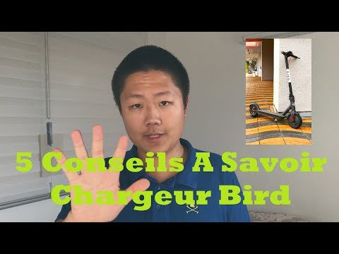 5 Conseils Pour Les Nouveaux Chargeurs Bird!