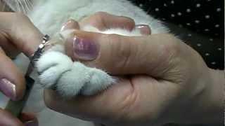 видео Как правильно стричь когти кошке