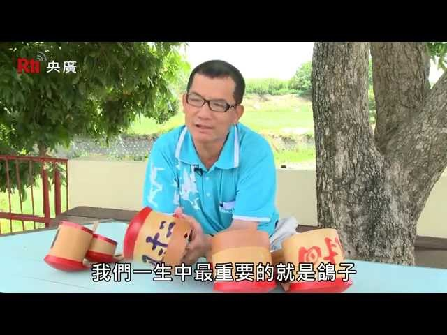聽見台灣-嘉義義竹鴿笭篇