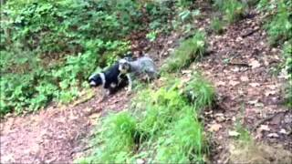 Bristol Dog Walking - Blaise Castle Woods