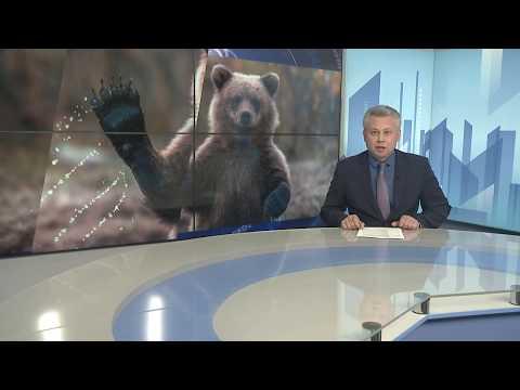 Вопрос: Что делать в Подмосковье, если встретили медведя?
