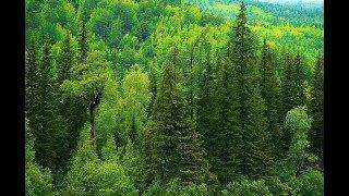 Зелёная планета / The Green Planet (Германия, 2012, Русская озвучка) HD
