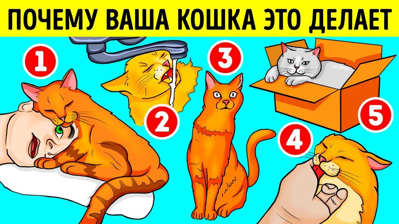 Вот почему ваша кошка любит залезать в коробки и раковины