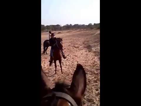 ss club, Stable & stable club, stabling, riding school, safari, ahmedabad, gujarat, india, horse,