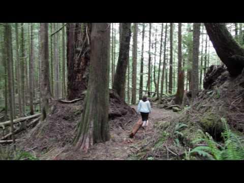 Avatar Grove in Port Renfrew, BC