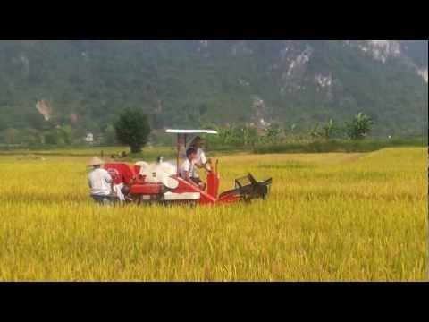 Máy gặt đập liên hợp Trung Quốc - ATK Định Hóa, Thái Nguyên - haisonco.vn