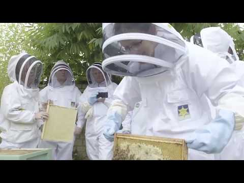 Video of Beekeeping Experience with Lunch