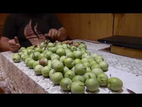 Как собирают грецкие орехи видео