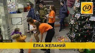 «Ёлка желаний» появилась в Могилёве