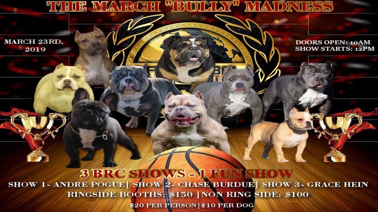 AMERICAN BULLY DOG SHOW MARCH 23RD FORTWAYNE,IN BRC GLOBAL