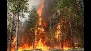 Адская жара   в Украине объявлен высший уровень пожарной опасности