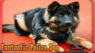 👍🐕Fantastic Police Dog- By PT Game Studio Role Playing -ITunes/Android