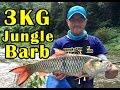 3kg jungle barb at Kaneg Krachan Reservoir