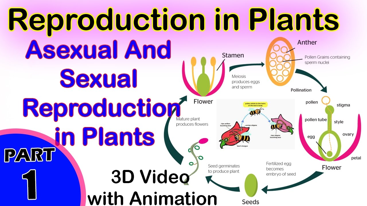 List all types of asexual reproduction in flowering