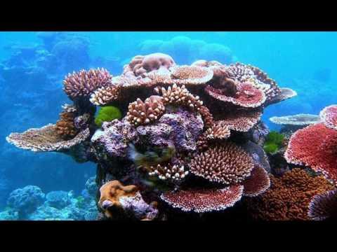 Ocean Pollution - Dodge3