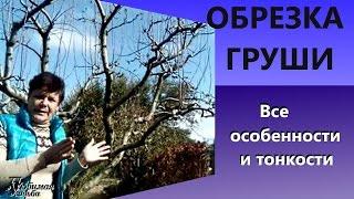 видео Омолаживающая обрезка деревьев - залог успеха