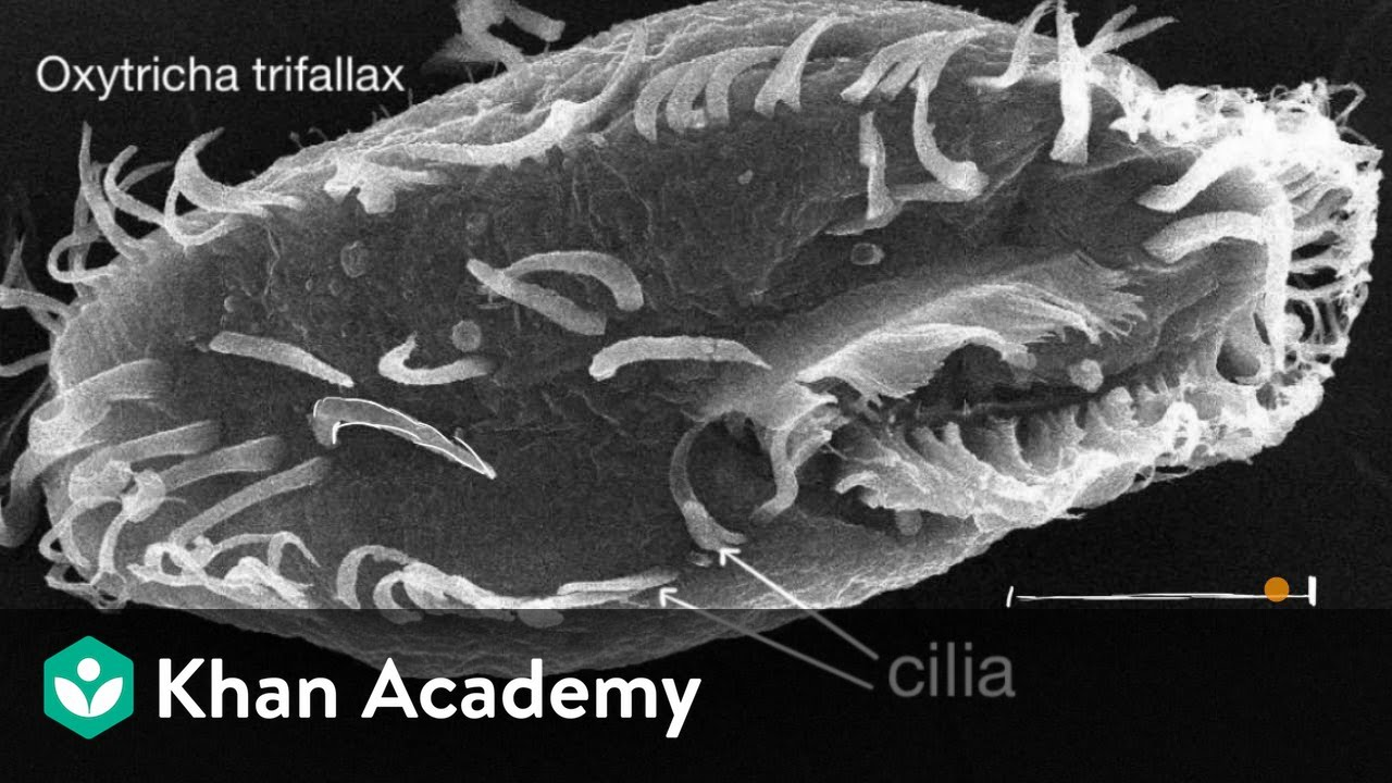 Introduction to cilia, flagella and pseudopodia