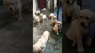 Dr Pawan Dog Kennel Viyoutube Com