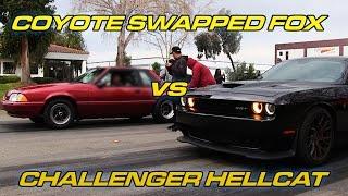 Hellcat vs Coyote Swapped Fox