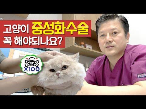 고양이 중성화 수술 꼭 해야되나요? -요지땅�