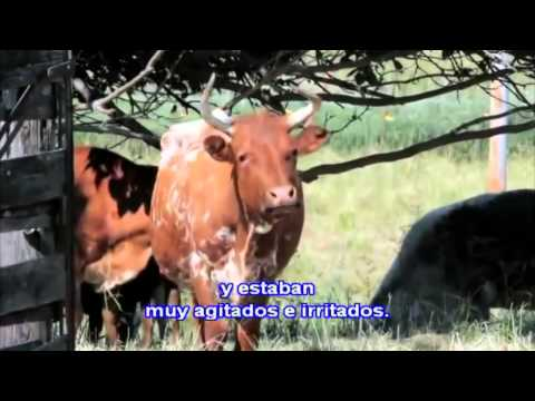 Organismos Genéticamente Modificados - OGM -