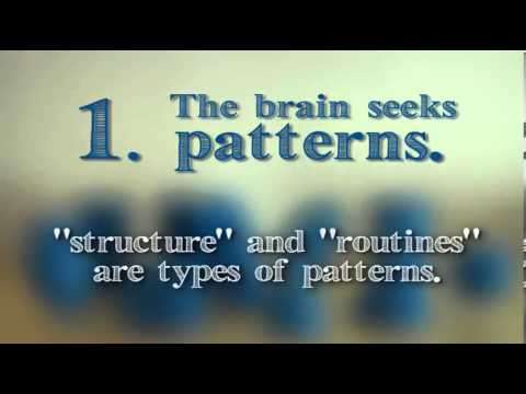 kineticvideo.com - THE-BRAIN-14190-Pattern-Structure-and-Novelty-14099