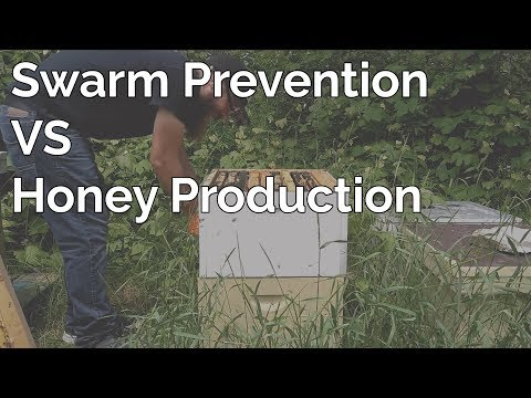 The Balance Between Swarm Prevention And Honey Production