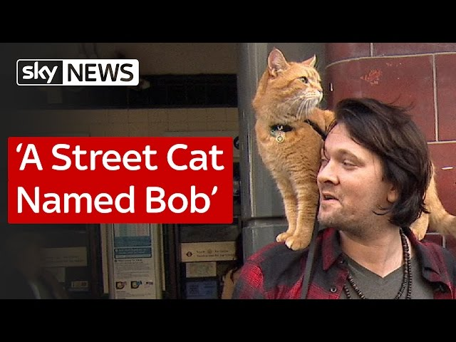 Bob London S Legendary Street Cat Has Died Watch Some Of His Old Videos Here
