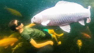 The Day I Went Swimming With Big Friendly Fish?!