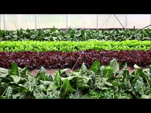 Ohio Foodshed Farmer Feature | Green Edge Organic Gardens