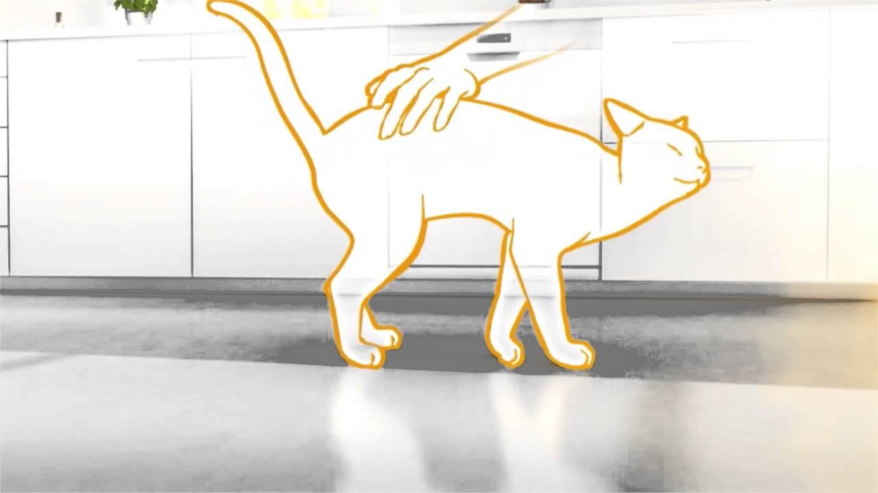 Veľká mačička diera com