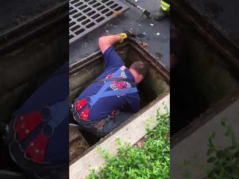 Members of the Greenwich Fire Department helped rescue a family of ducks that got caught in a storm drain.