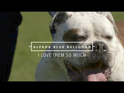 ALAPAHA BLUE BLOOD BULLDOG I LOVE THEM SO MUCH