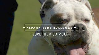 ALAPAHA BLUE BLOOD BULLDOG I LOVE THEM SO MUCH