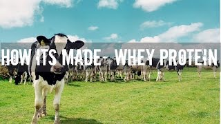 How Its Made- Whey Protein by Muscle Gauge Nutrition