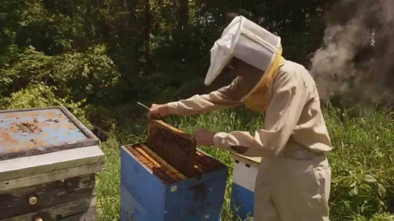 nick vlahos burts bees