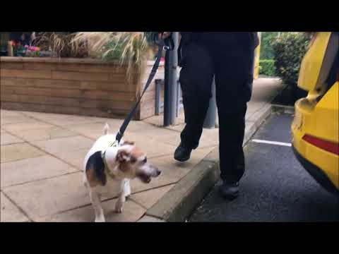 Dogs Trust Glasgow Seek Foster Carers For Rescue Dogs