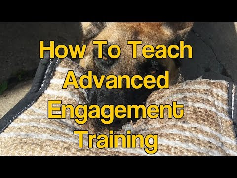 Dog Training Engagement Tug Play Malinois | Teach Out Command