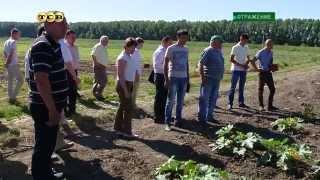 видео системы полива и орошения полей
