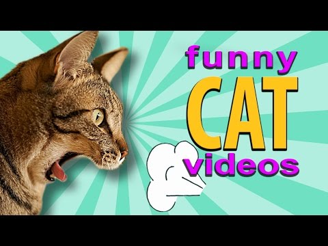 Funny Cat Videos – Cat Scared by Fart, Wrecking Ball Cat, Cat Pushes Cat Down Stairs