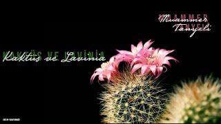 Muammer Tanyeli - Kaktu  s ve Lavinia  Cover  Resimi